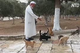 «Папа всех котят» кормит животных в мечети эль-Акса