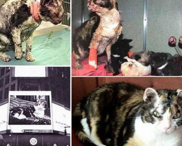 2 1 - Кошка спасла из огня свою семью и прославилась на весь мир