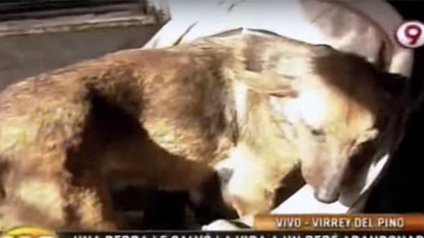 2 - Женщина среди щенков обнаружила младенца