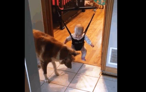 Собака учит ребёнка прыгать. Забавное видео