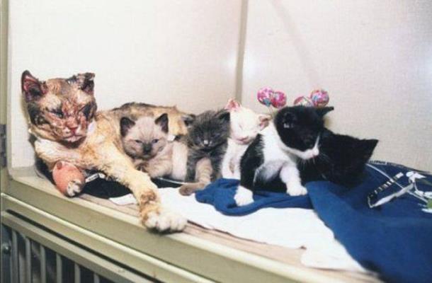 3 1 - Кошка спасла из огня свою семью и прославилась на весь мир