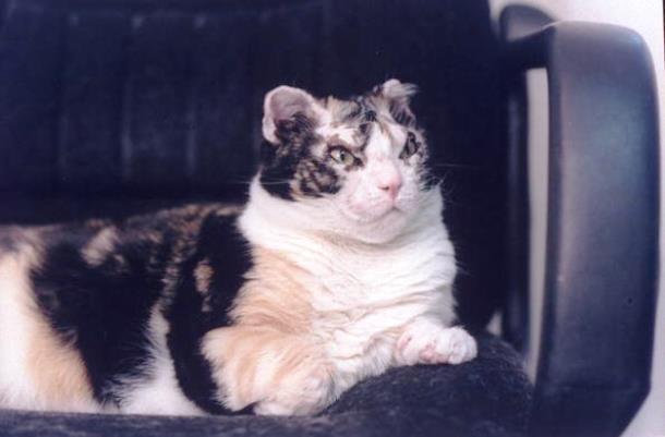 5 1 - Кошка спасла из огня свою семью и прославилась на весь мир