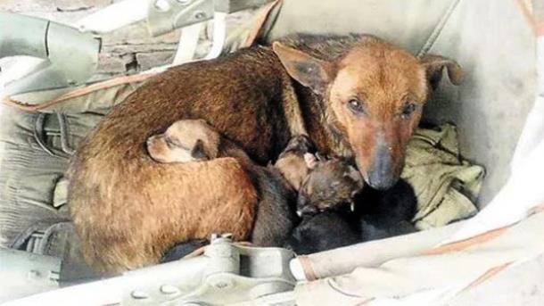5 - Женщина среди щенков обнаружила младенца