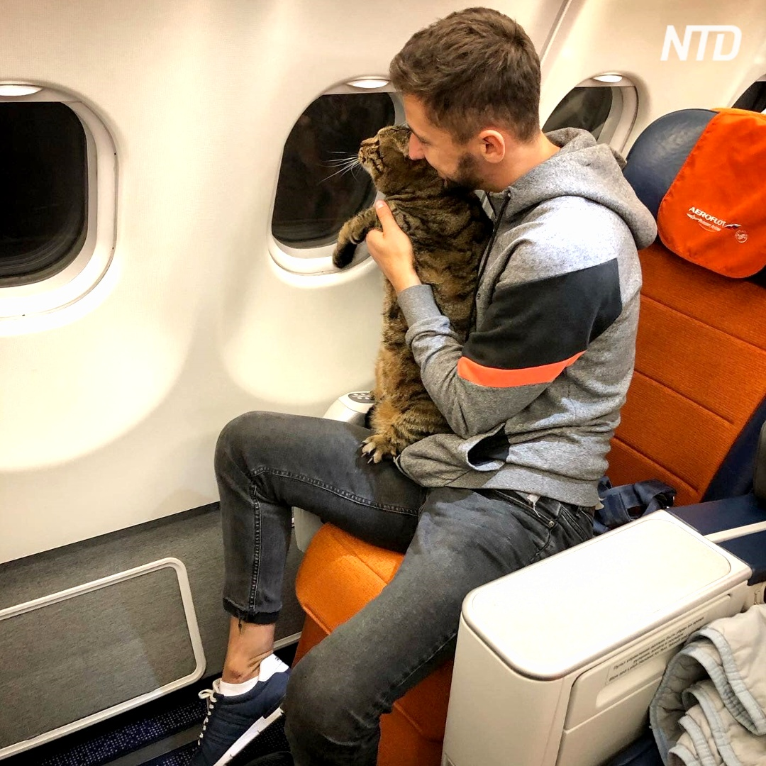 Россиянин и его толстый кот прославились, перехитрив «Аэрофлот»