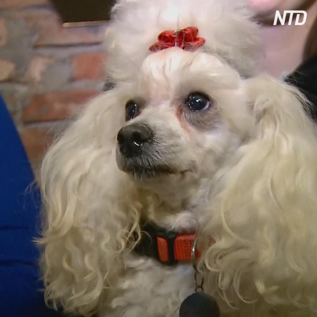 Собачье кафе в Перми помогает бездомным питомцам