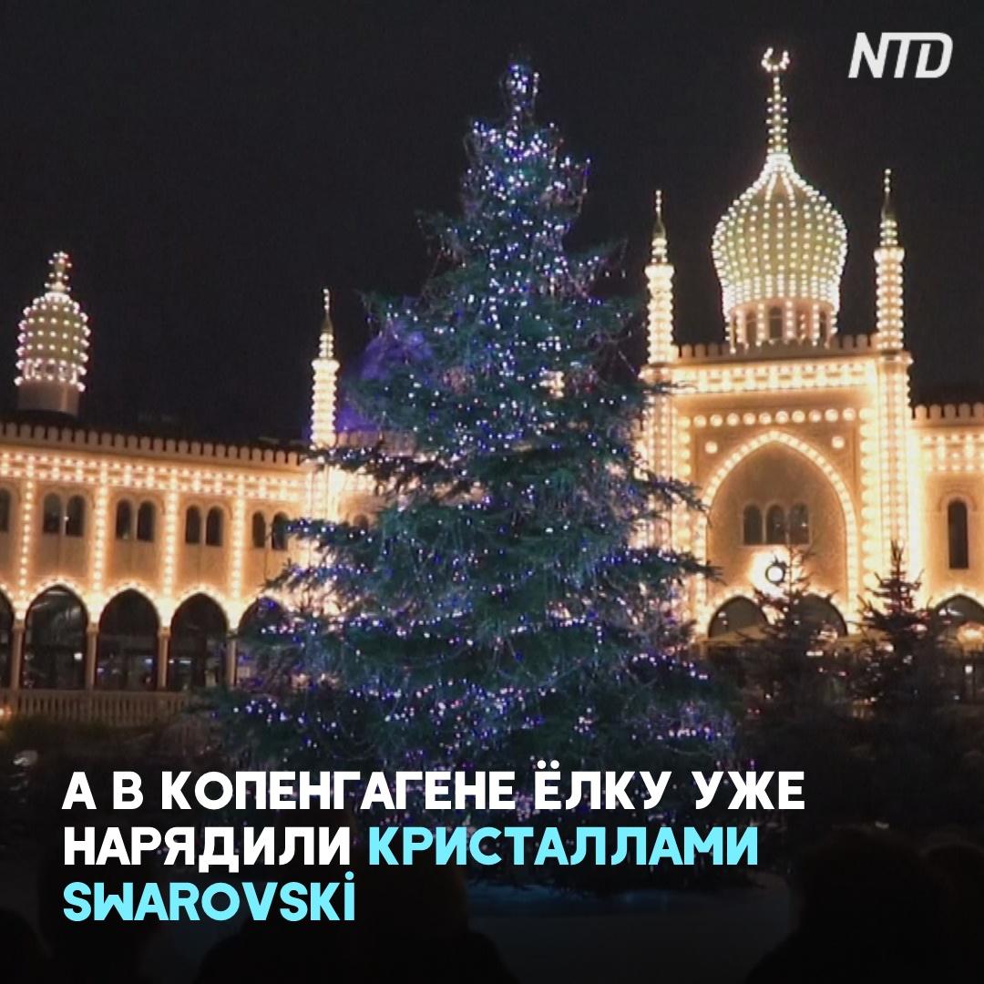 Норвегия подарит Великобритании рождественскую ель высотой 24 метра