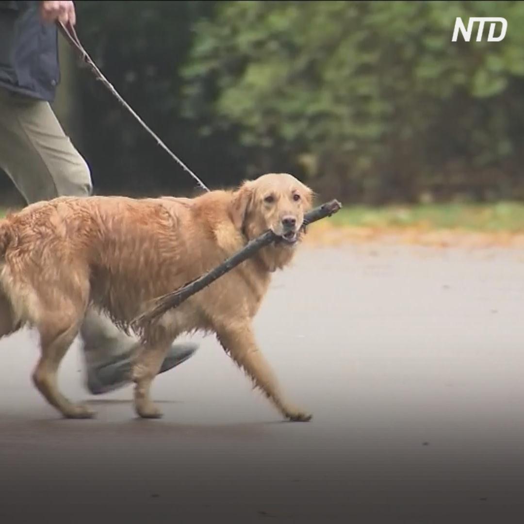 Ваша двухлетняя собака по человеческим меркам может оказаться 30-летней