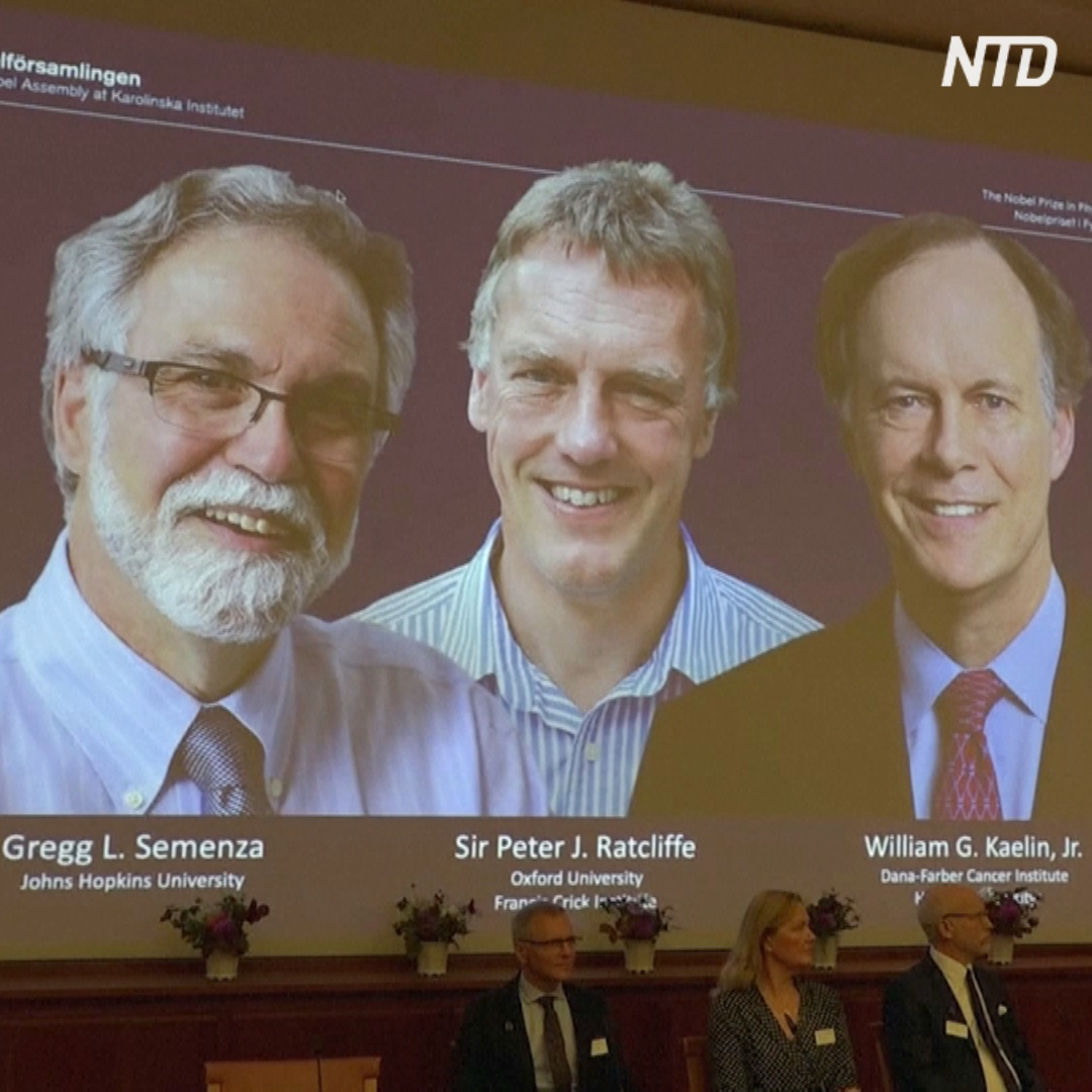 Нобелевская премия по медицине 2019 года: кто стал лауреатом
