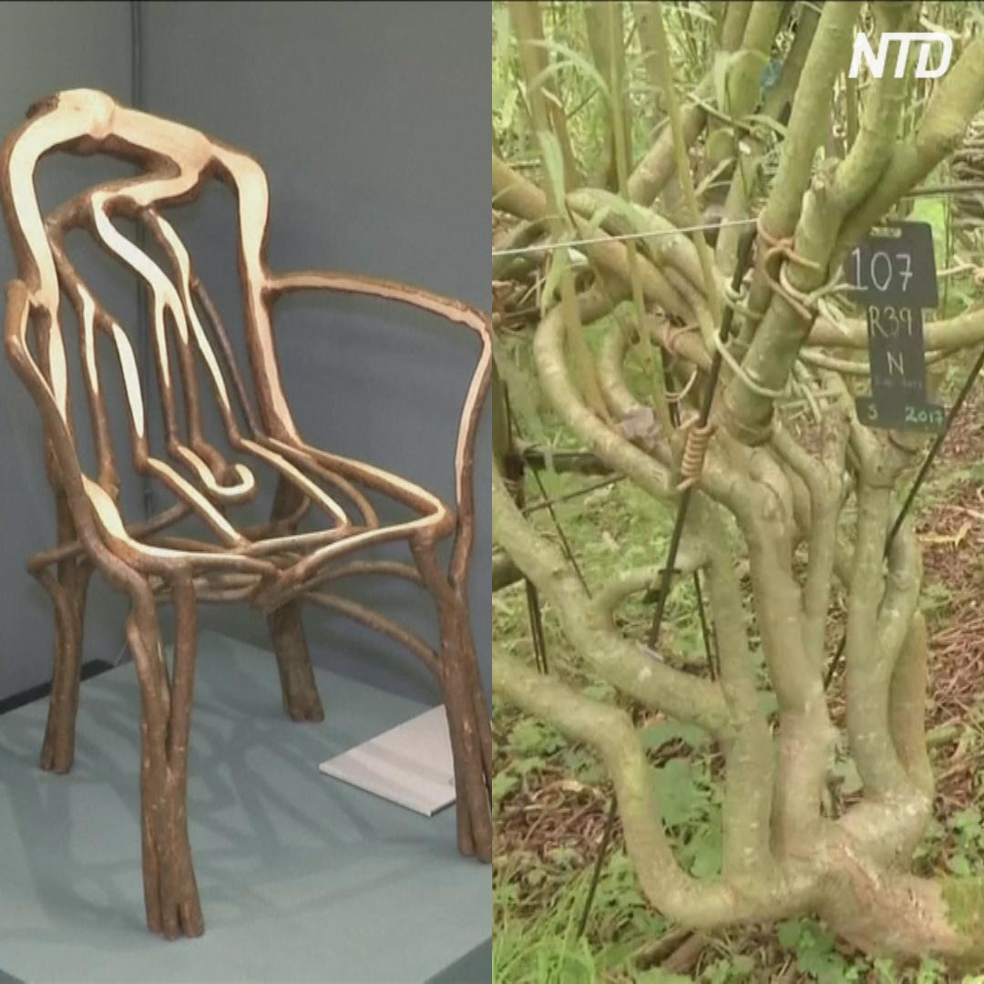 Стулья растут прямо из земли на английской «ферме мебели»