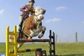 Как жительница Германии оседлала корову?