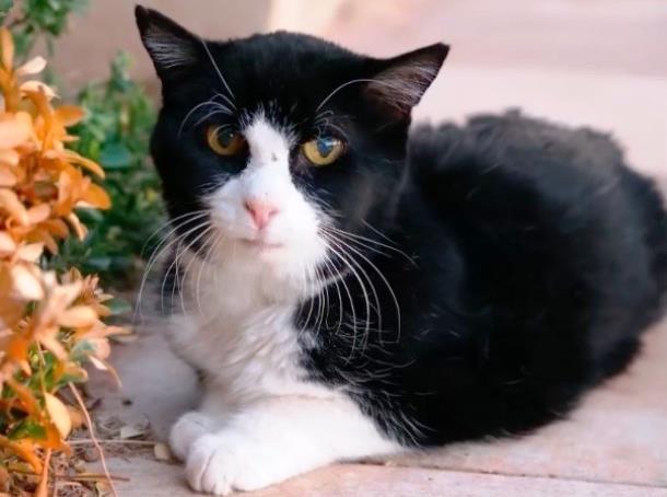20-летний кот из приюта очаровал новую семью