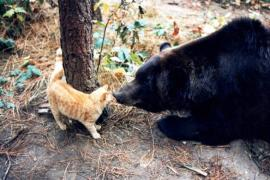 Как подружились кошка и медведь