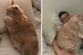 Толстого кота посадили на диету и приучают к активности. Фото