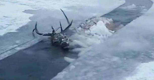 Как охотники спасали тонущего оленя в Бурятии
