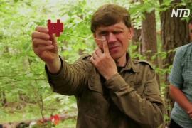 Экологи пытаются спасти от вырубки леса Кавказа