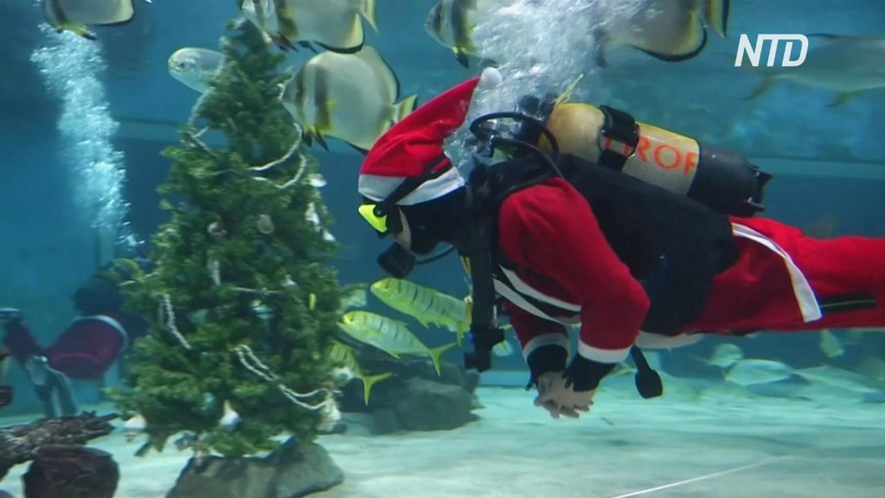 Ёлка для акул: в Будапештском океанариуме готовятся к Рождеству