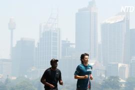 Сидней окутал густой смог