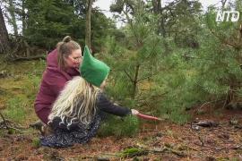 Почему в голландском заповеднике разрешили бесплатно рубить рождественские деревья?