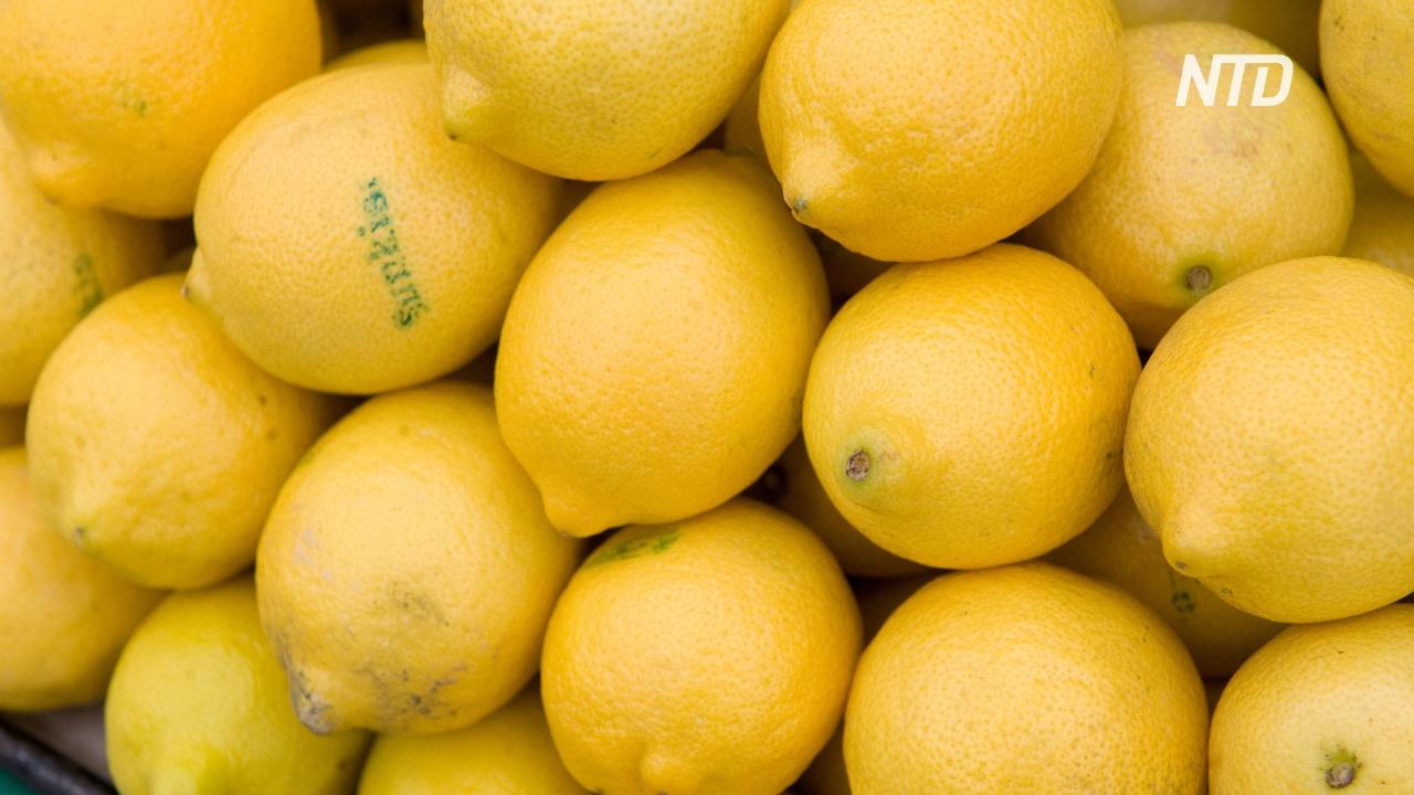 Калифорнийская компания выращивает лимоны без косточек