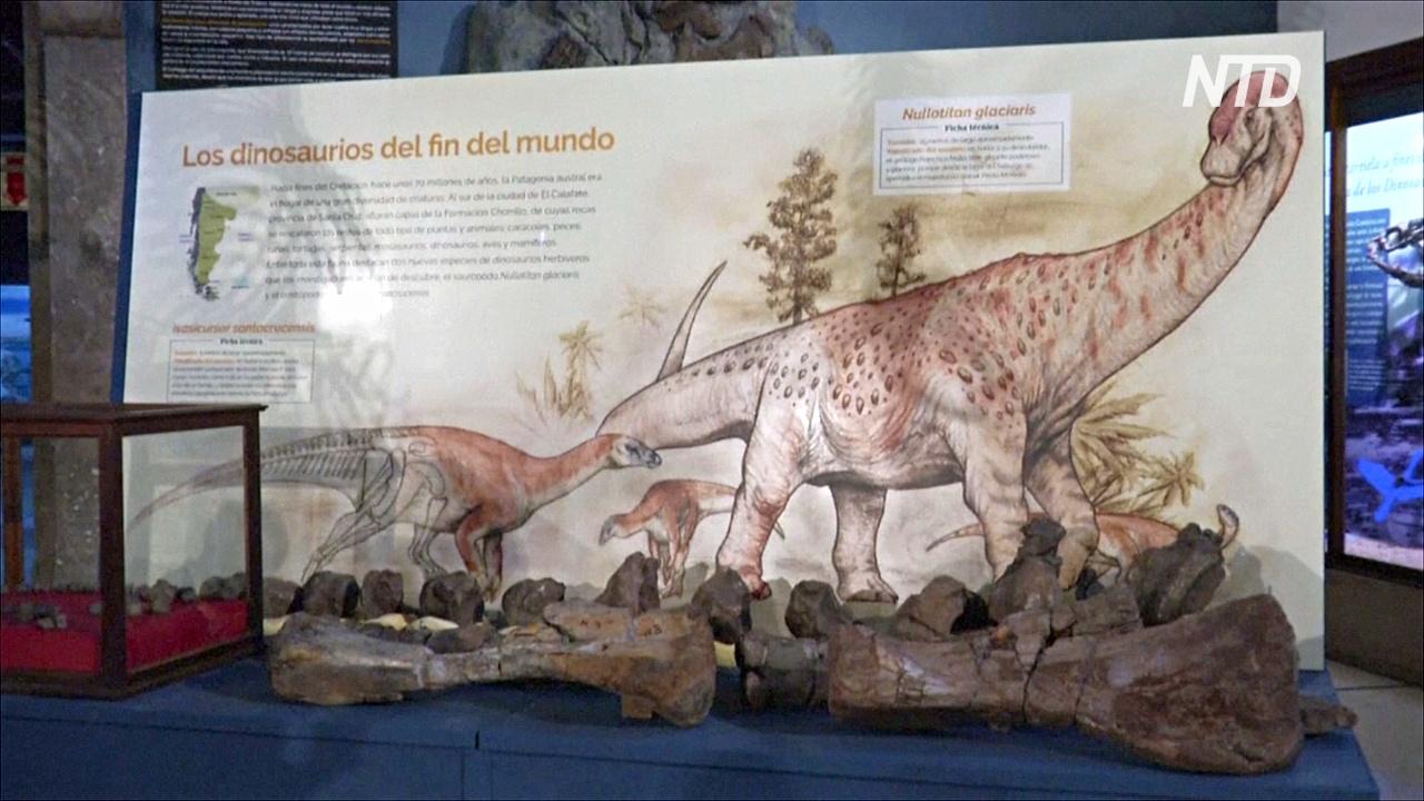 Аргентинские учёные обнаружили новые виды динозавров