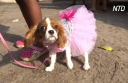 В Нигерии впервые провели собачий карнавал