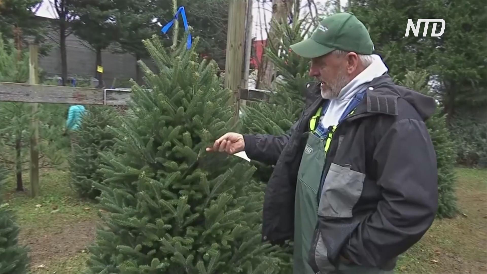В преддверии Рождества американцы с трудом находят ели из-за дефицита