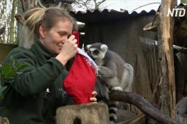 Как встречают Рождество в Лондонском зоопарке