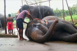 В Индии открылся лагерь для храмовых слонов