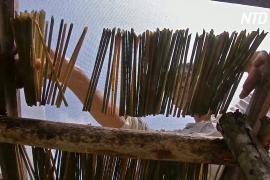 Вьетнамец делает коктейльные трубочки из травы