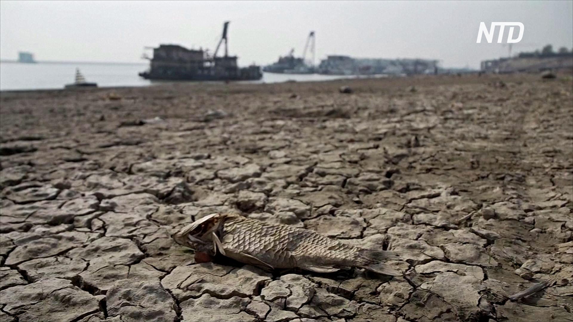 Некогда крупнейшее пресноводное озеро Китая быстро высыхает