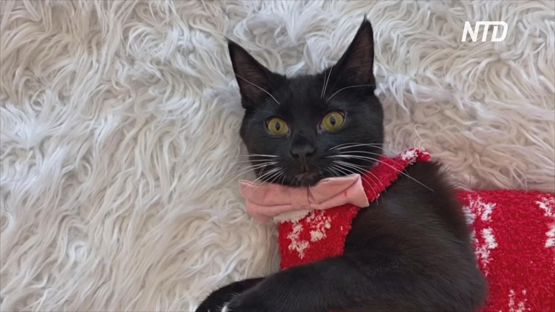 В вашингтонском кошачьем кафе нарядили питомцев в рождественские свитера