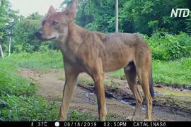 Биологи изучают с помощью фотоловушек мир диких зверей Коста-Рики
