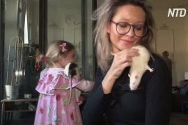 Польский волонтёр ищет хозяев бывшим подопытным крысам