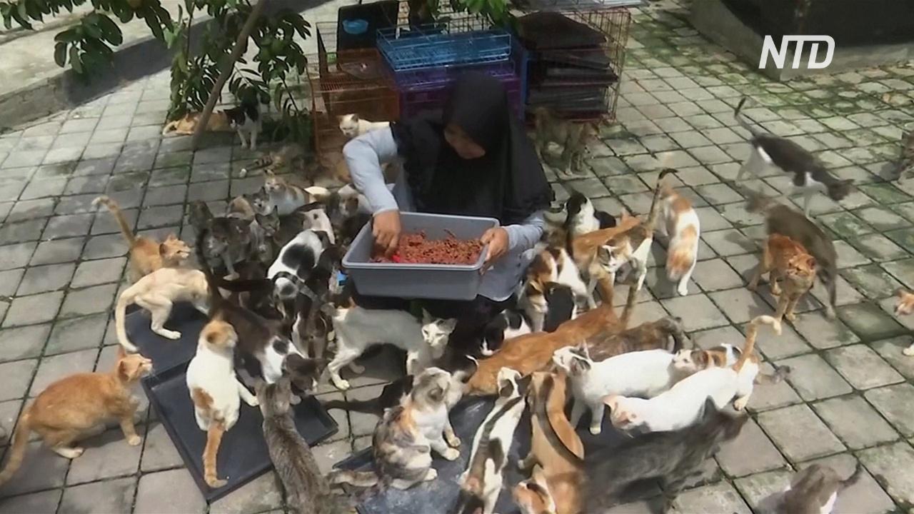 Индонезийские супруги приютили 250 больных и истощавших кошек