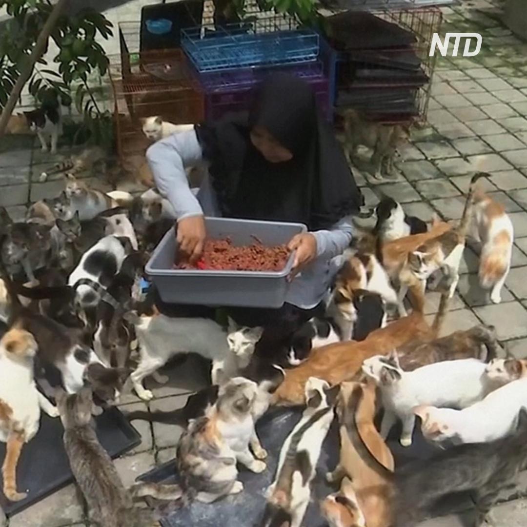Супруги держат дома 250 кошек