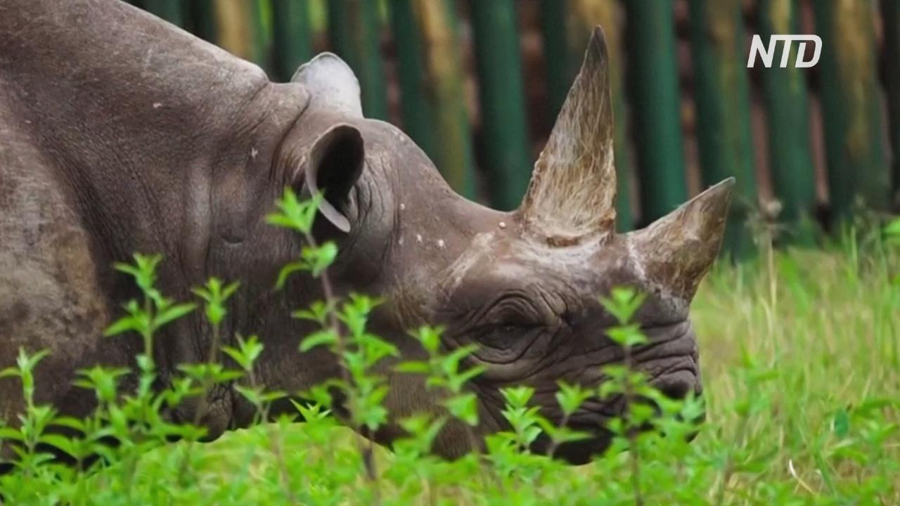 В Танзании умер самый старый в мире носорог, доживший до 57 лет
