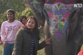 В Непале прошёл конкурс слоновьей красоты