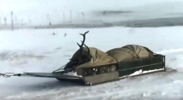 3 8 - Как охотники спасали тонущего оленя в Бурятии