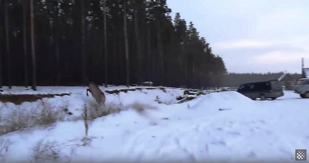5 4 - Как охотники спасали тонущего оленя в Бурятии