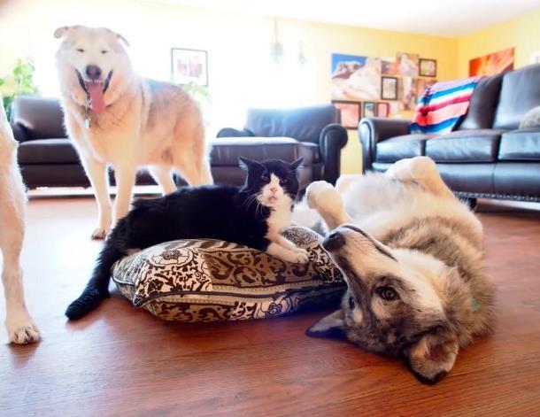 5 - 20-летний кот из приюта очаровал новую семью