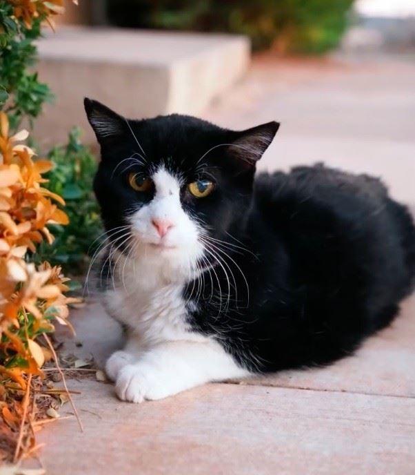 6 - 20-летний кот из приюта очаровал новую семью