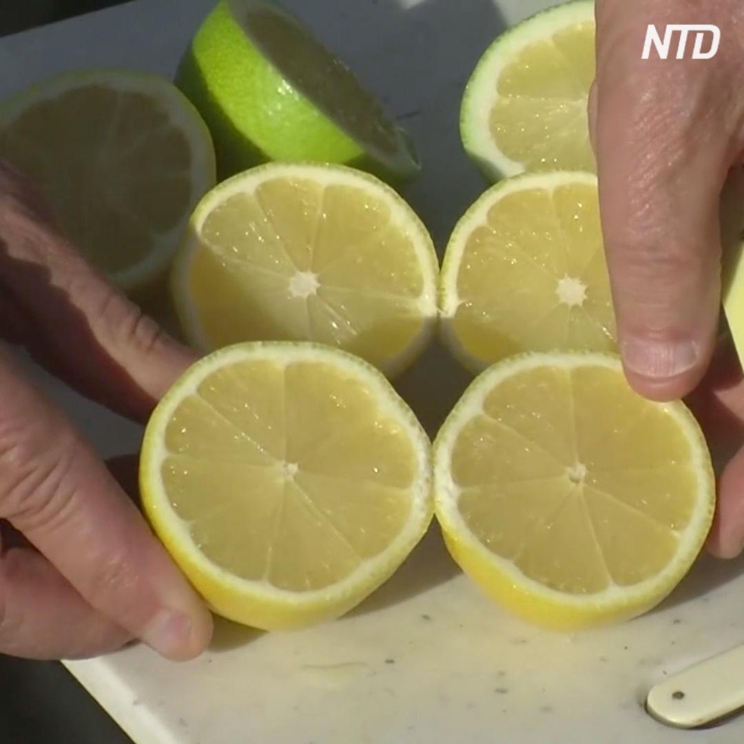 «Покупателей раздражают косточки»: в США продают лимоны без косточек