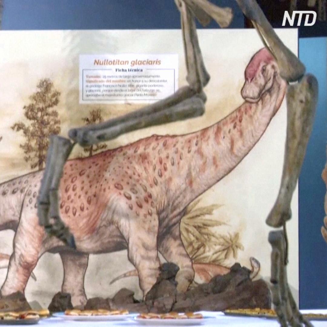 Новых травоядных динозавров обнаружили в Аргентине