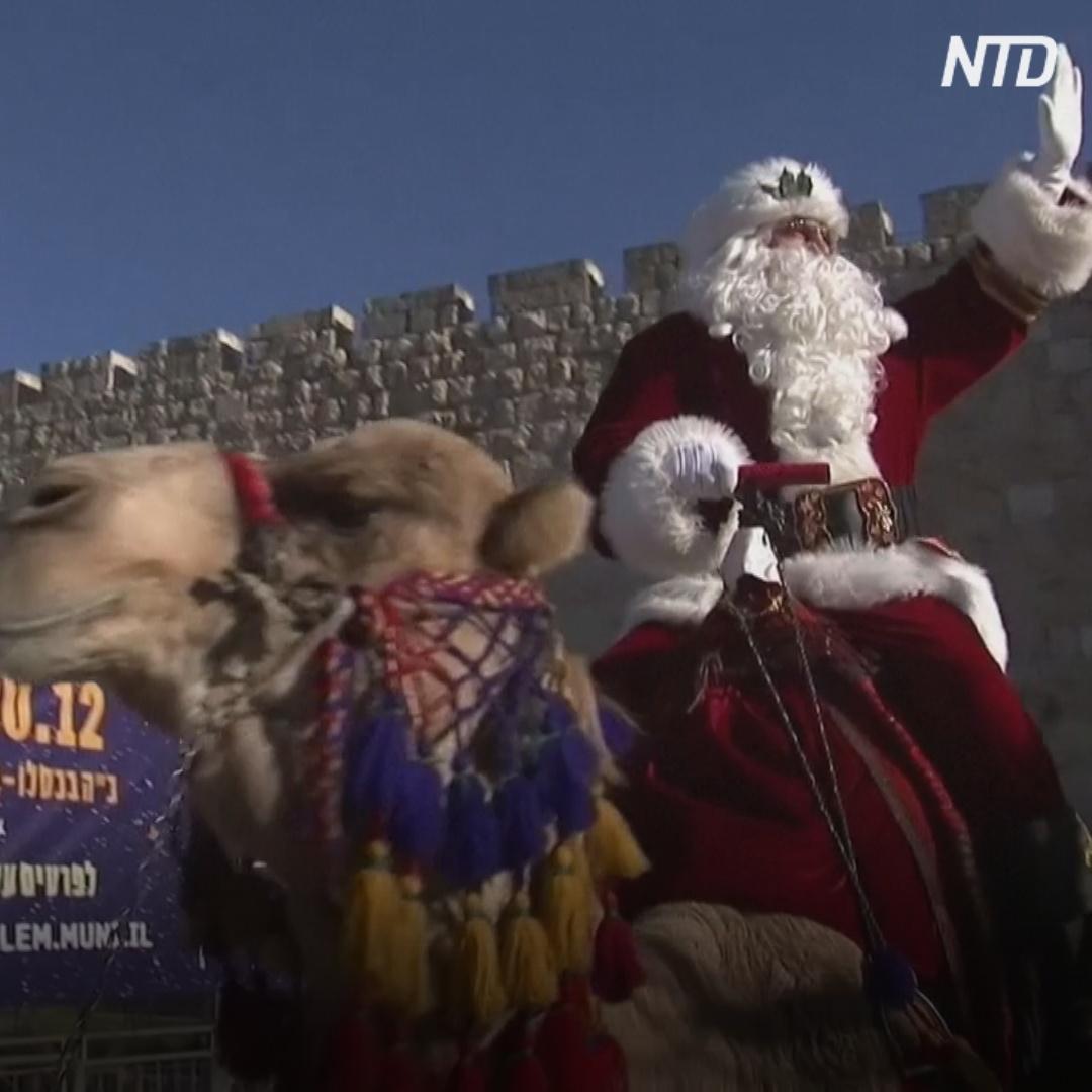 Иерусалим: Санта на верблюде и ёлки в горшках