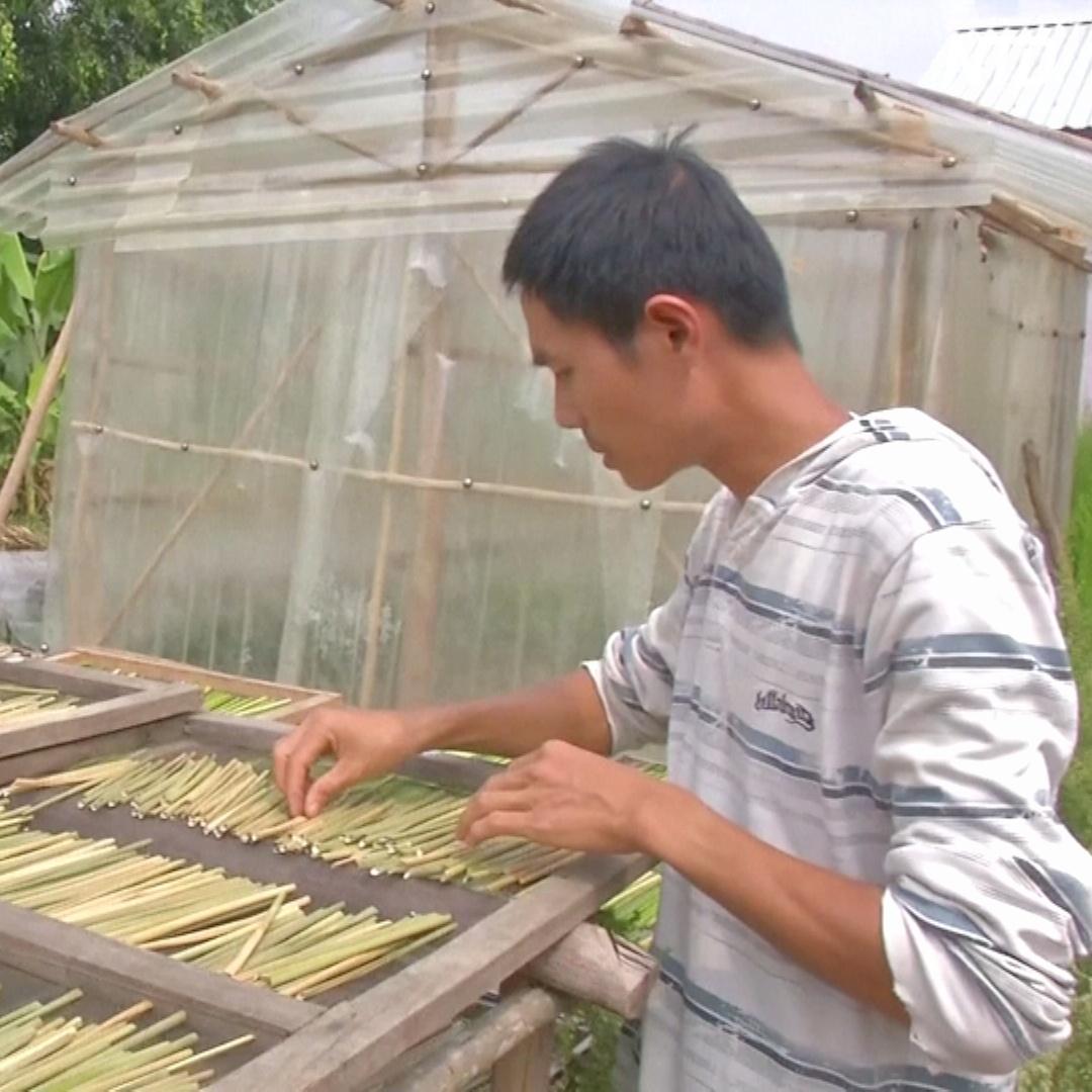 Коктейльные трубочки из травы: как бизнесмен спасает природу