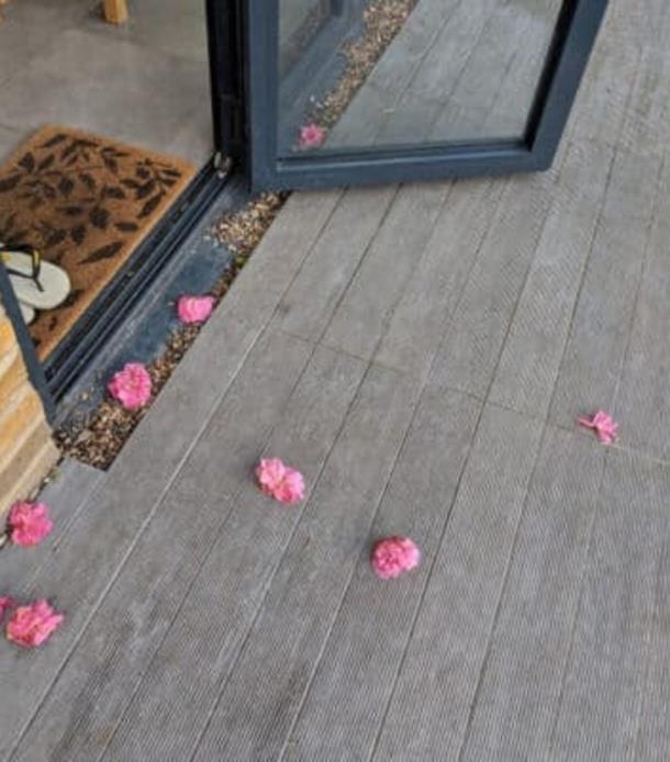 Novyj risunok 2 2 - Почему кошка носит женщине цветы
