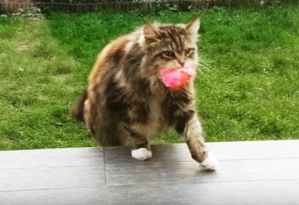 Novyj risunok 4 2 - Почему кошка носит женщине цветы
