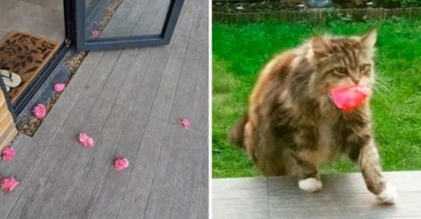 Почему кошка носит женщине цветы