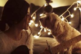 Видео рождественской песни с участием собаки посмотрели более 4 млн раз