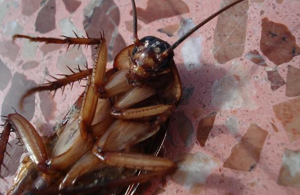 Почему нужно избавляться от тараканов в квартире